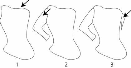 tutorial adobe illustrator vector