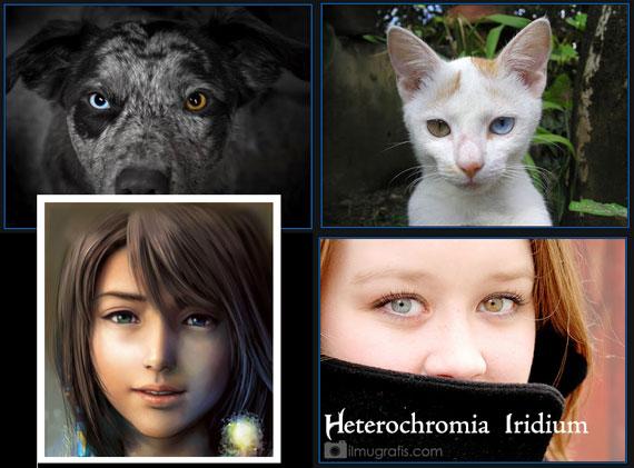 Heterochromia Iridium pada Anjing, Kucing, Tokoh Games, Manusia